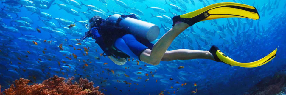 Enjoy the amazing sealife of Bunaken National Marine park
